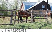 Купить «Лошади в загоне», видеоролик № 5976089, снято 4 июня 2014 г. (c) Кекяляйнен Андрей / Фотобанк Лори