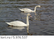 Купить «Лебеди», фото № 5976537, снято 13 апреля 2014 г. (c) Хименков Николай / Фотобанк Лори