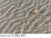 Купить «Песчаное волнистое дно Белого моря во время отлива. Соловки», фото № 5982897, снято 31 июля 2012 г. (c) Горшков Игорь / Фотобанк Лори