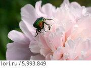 Купить «Храбрый муравей», эксклюзивное фото № 5993849, снято 8 июня 2014 г. (c) Щеголева Ольга / Фотобанк Лори