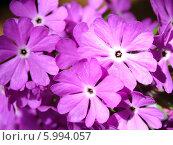 Цветы. Стоковое фото, фотограф Олег Бабенко / Фотобанк Лори