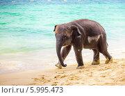 Маленький слоненок идет по берегу океана. Стоковое фото, фотограф Евгений Воробьев / Фотобанк Лори