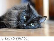 Купить «Черная кошка лежит на полу», фото № 5996165, снято 20 ноября 2019 г. (c) Землянникова Вероника / Фотобанк Лори
