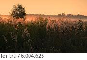Купить «Солнце, запутавшееся в траве», фото № 6004625, снято 13 августа 2013 г. (c) Ольга Коцюба / Фотобанк Лори
