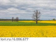 Купить «Цветущее поле, Беларусь», эксклюзивное фото № 6006677, снято 3 мая 2014 г. (c) Литвяк Игорь / Фотобанк Лори