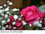 Цветы. Стоковое фото, фотограф Светлана Олюнина / Фотобанк Лори