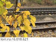 Осень. Стоковое фото, фотограф Мичурина Ирина / Фотобанк Лори