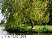 Купить «Красивый солнечный день на пруду с гнездом лебедя под деревом», фото № 6024969, снято 21 мая 2014 г. (c) Татьяна Кахилл / Фотобанк Лори
