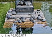 Купить «Пруд с черепахами в Аптекарском огороде. Москва», эксклюзивное фото № 6026017, снято 24 мая 2014 г. (c) Илюхина Наталья / Фотобанк Лори