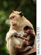 Семья обезьян, фото № 6034177, снято 12 апреля 2014 г. (c) Морозова Татьяна / Фотобанк Лори