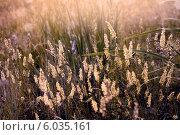 Фон из лесных трав освещенных солнцем. Стоковое фото, фотограф Лариса К / Фотобанк Лори