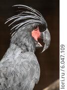 Купить «Хохлатый Попугай в зоопарке», эксклюзивное фото № 6047109, снято 5 июня 2014 г. (c) Дмитрий Неумоин / Фотобанк Лори