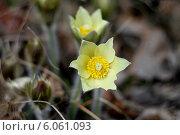 Купить «Подснежники весной», фото № 6061093, снято 2 мая 2014 г. (c) Хайрятдинов Ринат / Фотобанк Лори