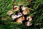 Гнездо с перепелиными яйцами, фото № 6061109, снято 17 мая 2014 г. (c) Хайрятдинов Ринат / Фотобанк Лори
