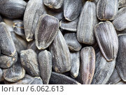 Семеня подсолнуха. Стоковое фото, фотограф Федорец Артем / Фотобанк Лори