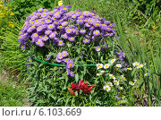 Купить «Клумба с садовыми цветами», эксклюзивное фото № 6103669, снято 6 июля 2014 г. (c) Елена Коромыслова / Фотобанк Лори