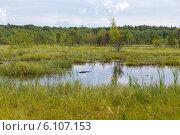 Купить «Галкинское болото. Национальный парк «Угра»», эксклюзивное фото № 6107153, снято 13 июня 2014 г. (c) Сергей Лаврентьев / Фотобанк Лори