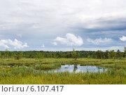 Купить «Галкинское болото. Национальный парк «Угра»», эксклюзивное фото № 6107417, снято 13 июня 2014 г. (c) Сергей Лаврентьев / Фотобанк Лори