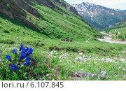 Цветы в Альпах летом. Стоковое фото, фотограф Nikolay Kostochka / Фотобанк Лори