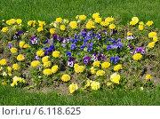 Купить «Цветочная клумба из однолетников», эксклюзивное фото № 6118625, снято 20 мая 2014 г. (c) Елена Коромыслова / Фотобанк Лори