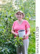 Купить «Женщина с урожаем черной смородины на дачном участке», фото № 6121329, снято 6 июля 2014 г. (c) Марина Славина / Фотобанк Лори