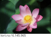 Красивый цветок. Стоковое фото, фотограф Torgotd / Фотобанк Лори