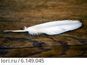Белое перо на деревянной поверхности. Стоковое фото, фотограф Александра Берг / Фотобанк Лори