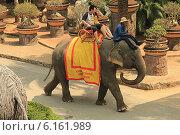 Купить «Таиланд. Тропический сад Нонг Нуч (Nong Nooch)», фото № 6161989, снято 22 февраля 2014 г. (c) Алексей Сварцов / Фотобанк Лори
