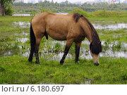 Купить «Конь пасётся на лугу», фото № 6180697, снято 23 июля 2014 г. (c) Землянникова Вероника / Фотобанк Лори