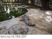Крокодил на отдыхе. Стоковое фото, фотограф Александр Первунин / Фотобанк Лори