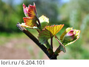 Купить «И снова весна», фото № 6204101, снято 4 мая 2014 г. (c) Sanna / Фотобанк Лори