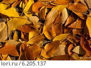 Опавшие листья клёна. Стоковое фото, фотограф Анастасия Долгова / Фотобанк Лори