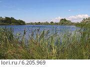 Купить «Река, укрывшаяся в зелени деревьев и осоки», фото № 6205969, снято 28 июня 2014 г. (c) Емельянов Валерий / Фотобанк Лори