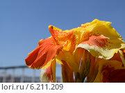 Купить «Цветок Канны на фоне голубого неба», фото № 6211209, снято 19 июля 2014 г. (c) Рамиль Усманов / Фотобанк Лори