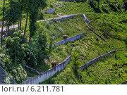 Купить «Медвежий парк в городе Берн, Швейцария», фото № 6211781, снято 2 июня 2014 г. (c) Boris Breytman / Фотобанк Лори