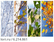 Купить «Береза, листья, четыре сезона. Коллаж. Календарь», фото № 6214861, снято 30 июля 2014 г. (c) Виктория Катьянова / Фотобанк Лори