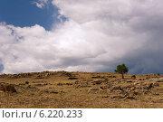 Грозовое небо и лошадь. Стоковое фото, фотограф OksanaOkss / Фотобанк Лори