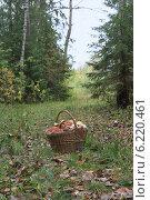 Корзина с грибами. Стоковое фото, фотограф Алексей Рассадин / Фотобанк Лори