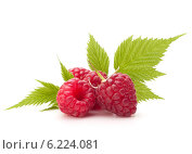 Купить «Sweet raspberry isolated on white background cutout», фото № 6224081, снято 9 сентября 2013 г. (c) Natalja Stotika / Фотобанк Лори