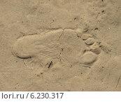 След на песке. Стоковое фото, фотограф Андрей С. / Фотобанк Лори