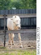 Молодая лошадь. Стоковое фото, фотограф Svetlana Zavrazhina / Фотобанк Лори