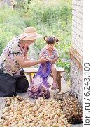 Купить «grandmother and granddaughter with onions», фото № 6243109, снято 31 июля 2014 г. (c) Майя Крученкова / Фотобанк Лори