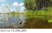 Купить «Пруд в солнечный день», видеоролик № 6246269, снято 6 августа 2014 г. (c) Кекяляйнен Андрей / Фотобанк Лори