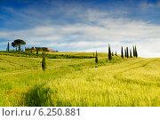 Купить «Пейзажи Тосканы. Италия», фото № 6250881, снято 14 мая 2014 г. (c) Наталья Волкова / Фотобанк Лори