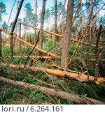 Поваленные деревья в лесу. Ущерб от бури. Стоковое фото, фотограф g.bruev / Фотобанк Лори