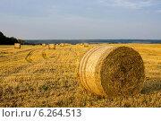 Круглые рулоны соломы на поле. Стоковое фото, фотограф Артем Федин / Фотобанк Лори