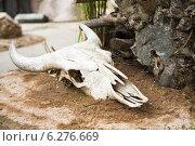 Череп крупное рогатое млекопитающее, останки. Стоковое фото, фотограф Анна Королева / Фотобанк Лори