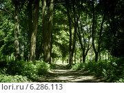 Дорога в лесу. Стоковое фото, фотограф Игорь Ямьяк / Фотобанк Лори