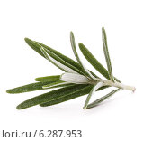 Купить «rosemary herb spice leaves isolated on white background cutout», фото № 6287953, снято 8 января 2014 г. (c) Natalja Stotika / Фотобанк Лори