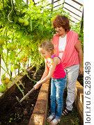 Купить «Woman with child grows harvest in the greenhouse», фото № 6289489, снято 26 мая 2013 г. (c) Гладских Татьяна / Фотобанк Лори